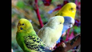 Colorir Papel- Levi lima (Trilha Sonora da Novela Fina Estampa)