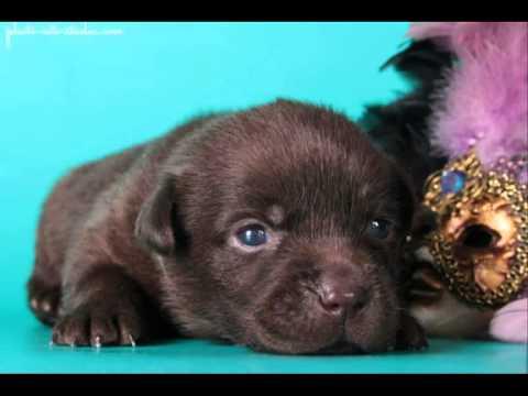 Сайт о собаках. Бесплатные объявления о продаже и покупке собак. У нас очень легко продать собаку.