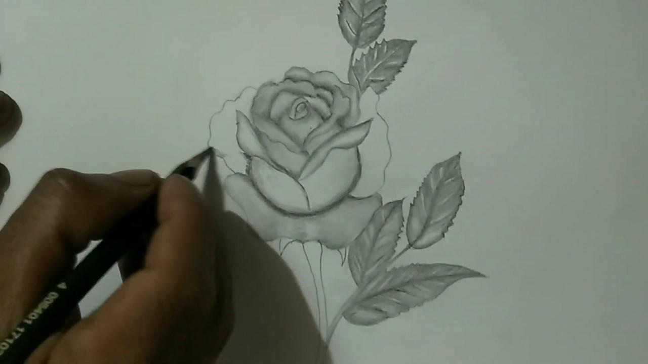 Tutorial Cara Menggambar Bunga Mawar 3d Pakai Pensil 2b Youtube