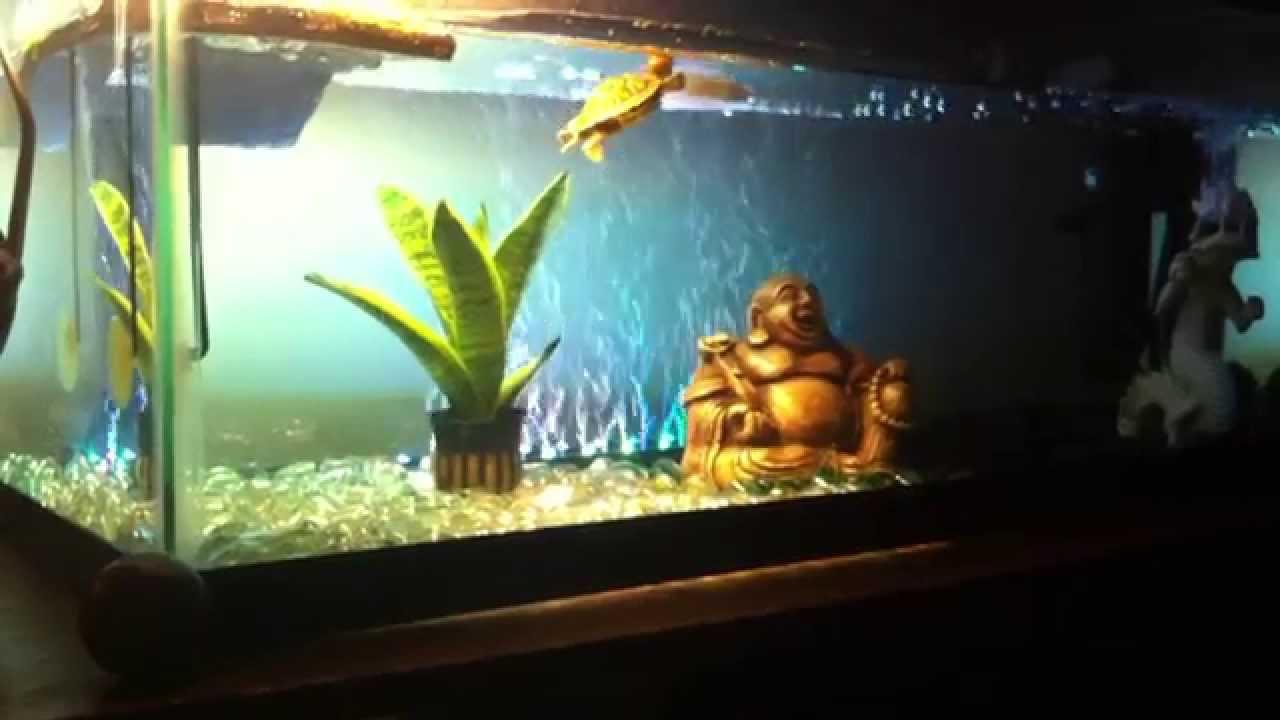 Redeared Slider Turtle Tank Setup YouTube