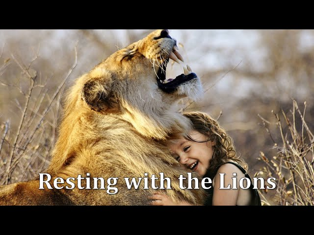 Resting With the Lions