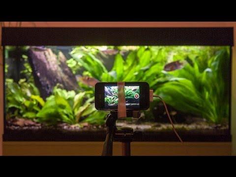 Tropical Freshwater Aquarium - Guiana Shield Habitat - South America