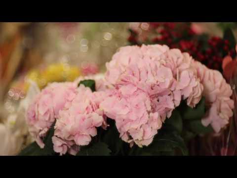 Floralia - Flowers Shop - Commercial Advertisement by: HDFoto