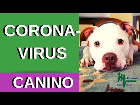CORONAVIRUS CANINO/ CORONAVIRUS FELINO.