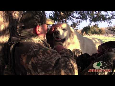 Giant Dog Attacks On Turkey Hunt - Mossy Oak
