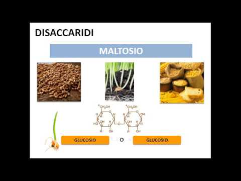 le-biomolecole:-i-carboidrati