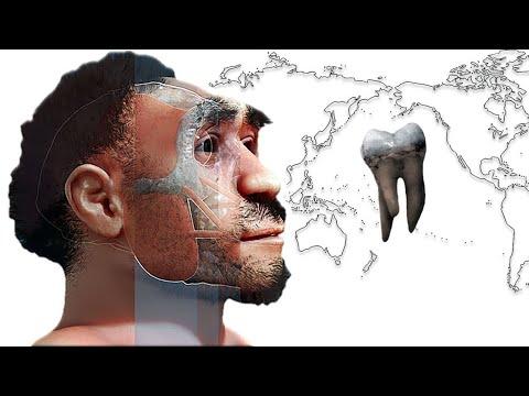Зубы в наследство от денисовцев. Денисовский человек и моляры с тремя корнями