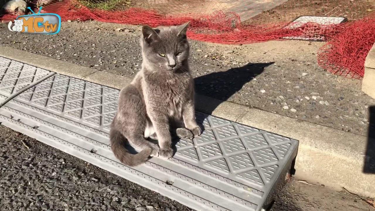 【Lang thang Nhật Bản】Đảo mèo Tajiroshima – Sendai