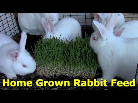 Inexpensive & Healthy Rabbit Feed By @GettinJunkDone