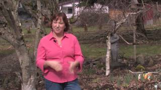 Tomatoes & Gardening Tips : How to Grow a Serviceberry Tree