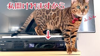 DVDレコーダー開けにハマってしまった猫に毎晩寝させてもらえません