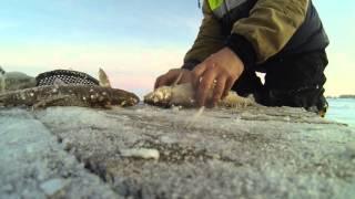 видео: Зимняя рыбалка, приготовление скоросолки из рыбы