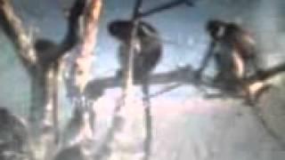 A foking in bador