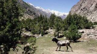New Balti Song 2010 (Radio Pakistan, Baltistan Channel) Live Song baad e saba