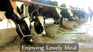 Koraput Dairy