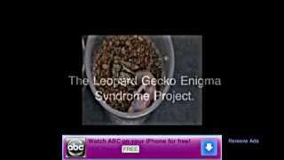 ENIGMA SYNDROME LEOPARD GECKOS!!!