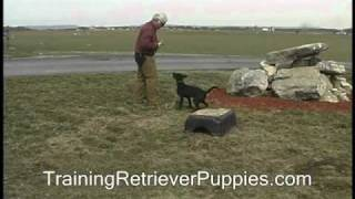 Dog Training - Using Verbal Marker Casting And Handle On Return