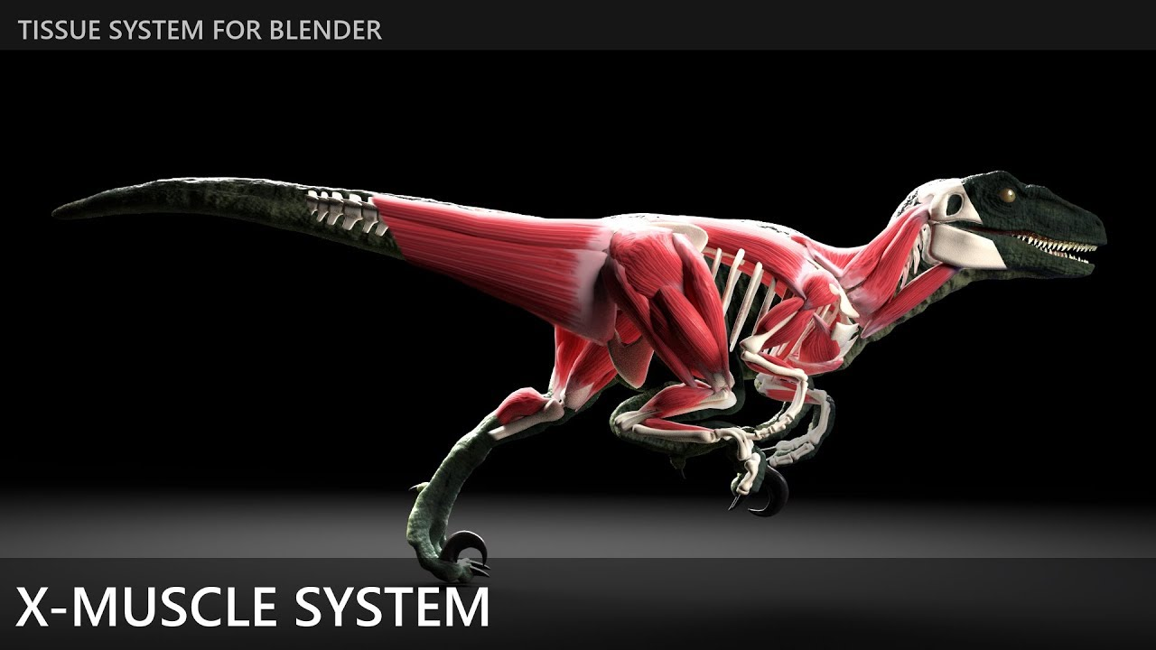 X-Muscle System 2 8