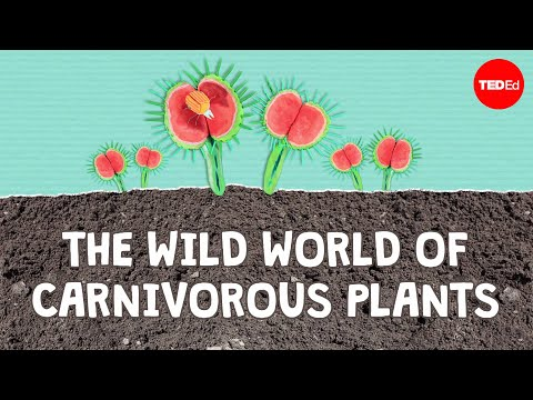 Video image: The wild world of carnivorous plants - Kenny Coogan