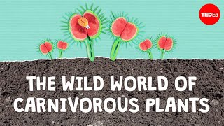 The wild world of carnivorous plants - Kenny Coogan