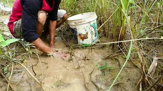 Wow Great Culture In My Country! A Fisher Show The Way to Find Fish & Catch Fish A Lot In Mud Easily