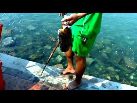 экскурсии в паттайя видео рыбалка