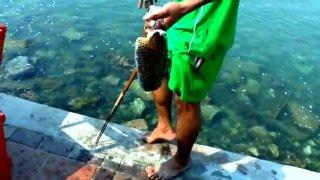 Паттайя Рыбалка с берега на Джомтьене
