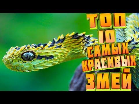 ТОП 10 САМЫХ КРАСИВЫХ ЗМЕЙ/САМЫЕ КРАСИВЫЕ ЗМЕИ/ТОП 10 САМЫХ КРАСИВЫХ ЗМЕЙ В МИРЕ!