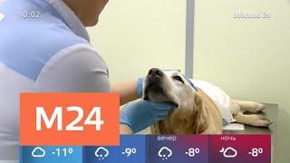 Бешеная собака собаки укусила мужчину в Раменском - Москва 24