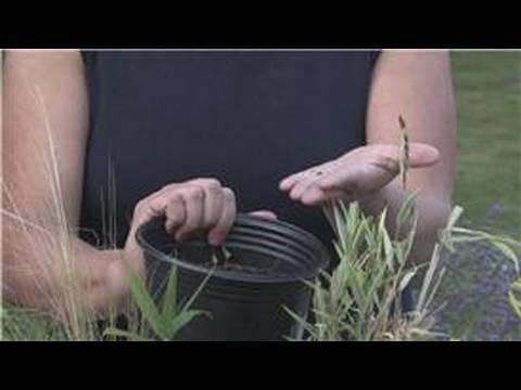 Edible Gardening : How to Grow Flax Seed