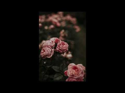 Download Flower  89