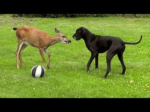 Cutest Animal Odd-Couples