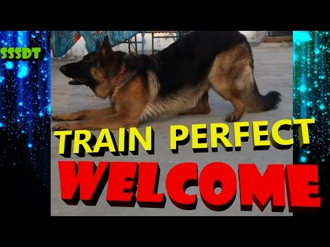 How to train your dog to Perfect welcome in hindi { dog training in hindi }