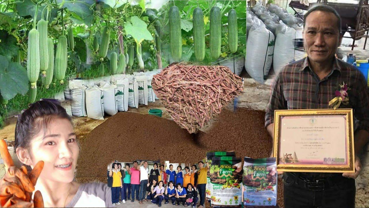 สุดยอดเกษตรกรไทย!!..พื้นที่1ไร่มีรายได้2ล้านบาทต่อปี