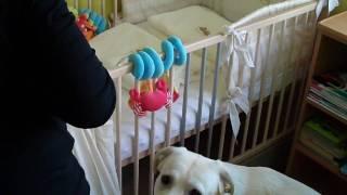 Zokor wita dzieci - ciąg dalszy