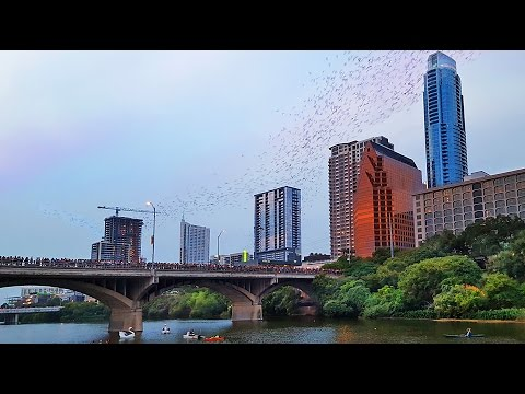 Austin's Congress Avenue Bridge Bats on a Full Moon