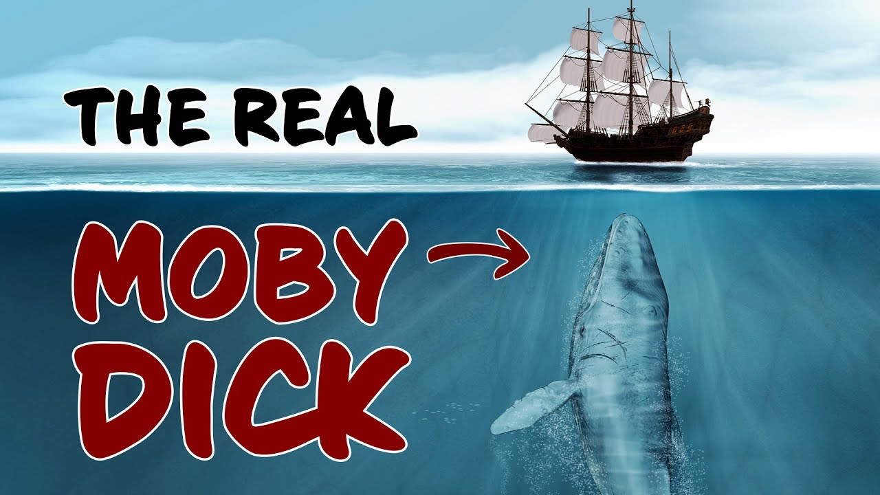 The Terrifying Story of the Real Moby Dick
