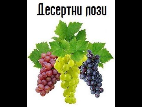 Овощен Разсадник  - Сортове лози  - Www 10plus1 Eu