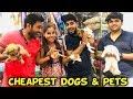 - CHEAPEST DOGS | Part-2 | Sanjhalika Vlog