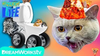 PIZZA CAT Eats HAMSTER?! | YOUR COMMENTS COME TO LIFE