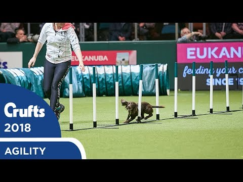 Agility - Crufts Singles Final - S/M/L Part 1 | Crufts 2018
