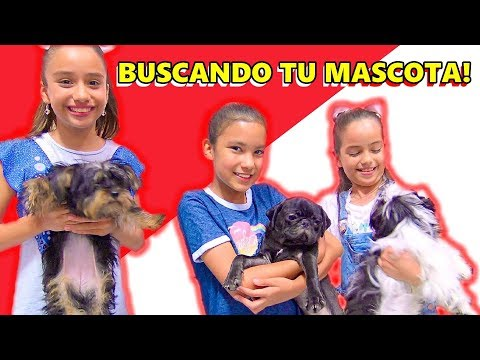 BUSCANDO LA MEJOR MASCOTA | TV ANA EMILIA