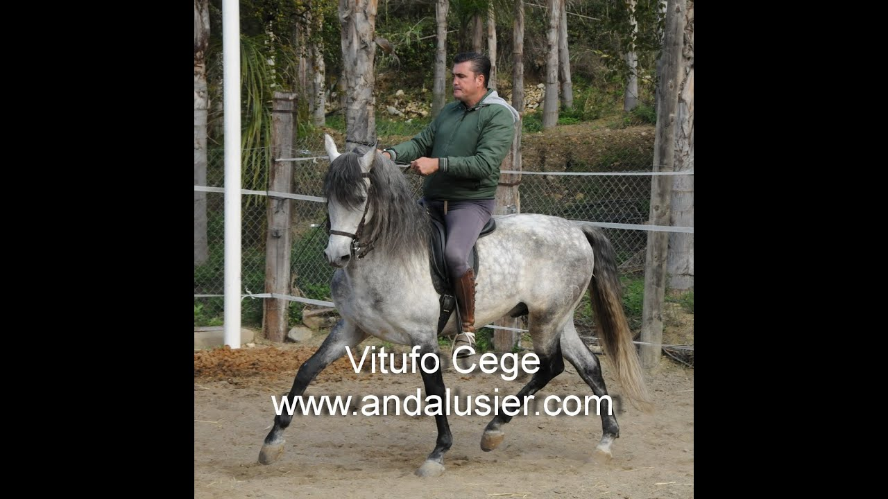 Andalusier.Com