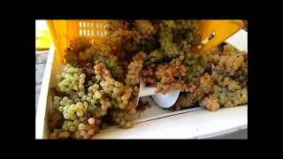 La deraspatrice per uva di Fernando. #vendemmia #vino