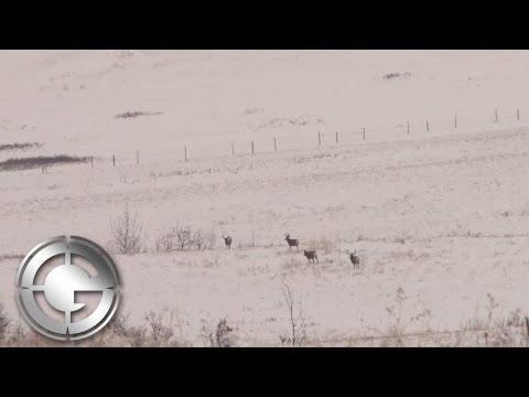 Alberta Mule Deer Hunt With The Gunwerks 7LRM