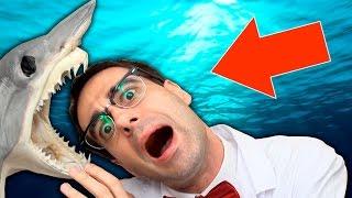 Qué hay dentro de un Tiburón disecado?