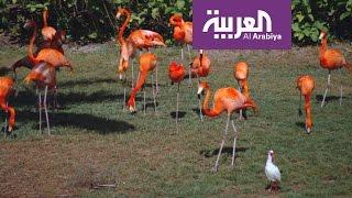 جزيرة الغابة تعد موطنا لأكثر من 120 صنفا من الحيوانات