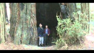 Inside giant Redwood tree