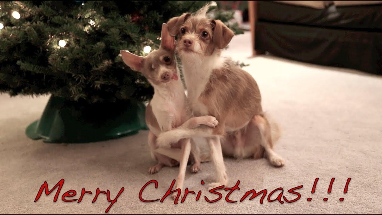 merry christmas xmas dog tricks training youtube