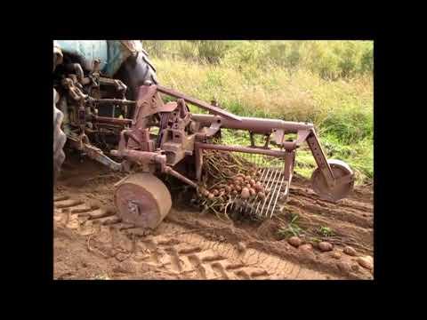 Картофелекопалка транспортерная для трактора - YouTube